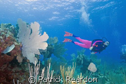 Wife and dive buddy in a scene with sea fan in Grand Cayman. by Patrick Reardon