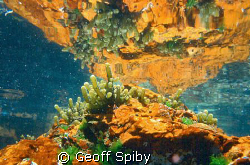 reflections in a rockpool False Bay Cape Town by Geoff Spiby