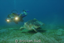 Turtle in the red sea by Brocken Rudi