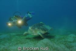 Turtle in the red sea by Brocken Rudi