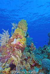 Reef shot from Bob's wall, North shore, Grand Cayman.  Wa... by Patrick Reardon