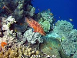 Hard coral garden. by Bea & Stef Primatesta