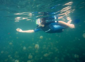 Kim in awe of the jellyfish at Jellyfish Lake, Palau.  Ta... by Beverly Speed