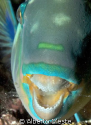 Parrotfish sleeping -  night dive in Maldives by Alberto D'este