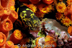 I shot this with a Nikon D300 in a Sea & Sea housing, 60m... by Andrew Mckaskle