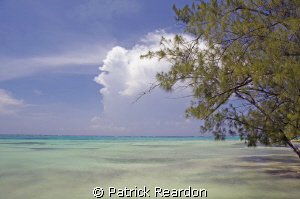 Pastel paradise.  One of the things I love about diving i... by Patrick Reardon
