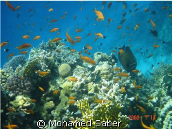 RED SEA BY; MOHAMED SABER by Mohamed Saber