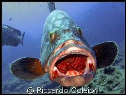Open Your Mouth.... Please !!!! Shoot taken with my Cano... by Riccardo Colaiori