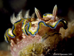 Nudi coming Close to my Canon 400D/hugyfot.... by Patrick Neumann