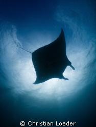 Manta. Baa Atoll, Maldives. Olympus SP350, Inon fisheye l... by Christian Loader