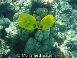 red sea  BY :MOHAMED SABER by Mohamed Saber