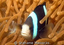 Shot off Tioman Island, Peninsula Malaysia, using my Olym... by Grahame Massicks