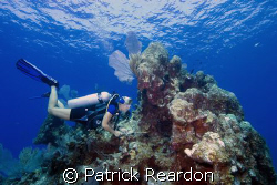 Our dive guide, Kate, from Indigo Divers, points out crit... by Patrick Reardon