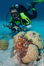 PP and his Octopus.  Cocos (Keeling) Islands, Australia. ... by Ross Gudgeon