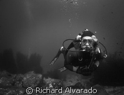 My Dive Buddy by Richard Alvarado