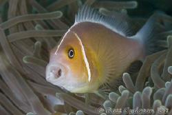 Aaaaaaaaagh!!  What was that bright flash?  Ningaloo Reef... by Ross Gudgeon