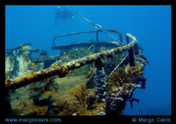 The bow of the Sea Star wreck off the coast of Freeport, ... by Margo Cavis