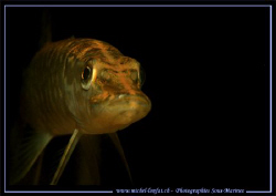 A joung pike fish :O) by Michel Lonfat