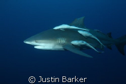This pic was taken on pinnacles reef off  Ponto . by Justin Barker