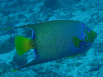UNderwater colour in Cozumel.  Taken with a olypus C50 wi... by Anna Visconti