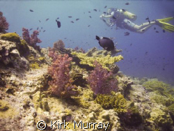 Nice to get a diver in just the right position, taken wit... by Kirk Murray