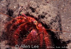 Hermit crab.Nikon F100,60mm,f22,1/60,YS-120*2,RVP50. by Allen Lee
