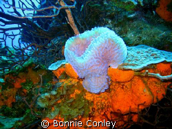 Photo taken August 2008 at Grand Cayman with a Canon SD550 by Bonnie Conley