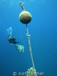 Diver,bat fish and bouy line above the famous SS Thistleg... by Justin Barker