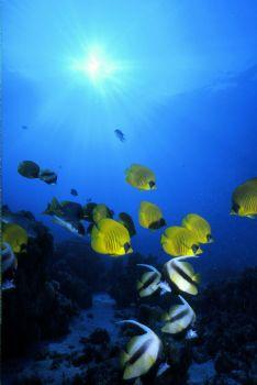 Red Sea, Hurgada,  by Tom Huff