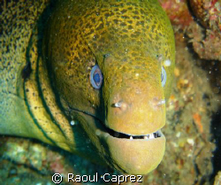 I am beautiful and very friendly ! by Raoul Caprez