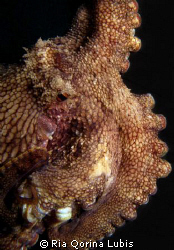 Octopus. Taken @ Puri Jati by Ria Qorina Lubis