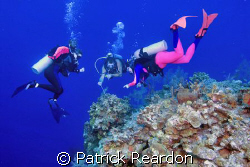 Chris, of Indigo Divers, points out tiny shrimp and a cra... by Patrick Reardon