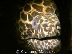 This moody beast was found off Tioman Island, shot with m... by Grahame Massicks