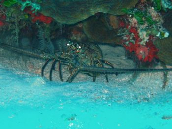 this hidden creature was taken off the shore of Cozumel, ... by Anna Visconti