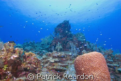 Beautiful, healthy reef at Chinese Garden, North wall, Gr... by Patrick Reardon