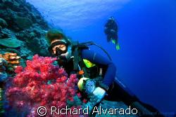 Diver looking at sea fan by Richard Alvarado