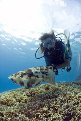 My friend watching a cuttlefish laying eggs on the reef by Erika Antoniazzo