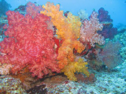 drift dive @ moso island  by Hubert Kruschina