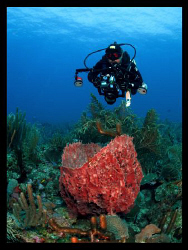 The Underwater photographer.  Too bad this diver was look... by Juan Torres