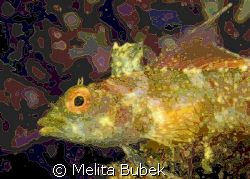 ADCSee Pro Manipulated - I like this kings-golden-look of... by Melita Bubek