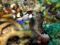 Taken at Marissa divesite at Samal Island, Davao City. C... by Arthur Castillo