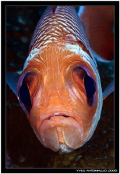 Not the most attractive fish portrait 360D/70mm by Yves Antoniazzo