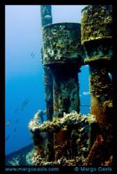 Sea Star Wreck in Bahamas by Margo Cavis