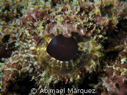 The Eye of the scorpionfish. by Abimael Márquez