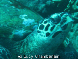 Turtley Awesome! by Lucy Chamberlain