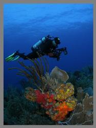 My diving buddy Abimael.   by Juan Torres