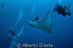 Divers & sea eagle by Alberto D'este