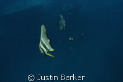 Bat fish with bouys and the famous SS Thistlegorm below. by Justin Barker