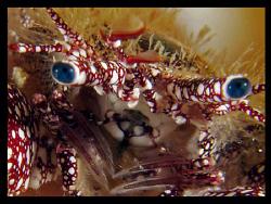 Hermit crab by Juan Torres