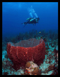 Divers and barrel sponge. by Juan Torres